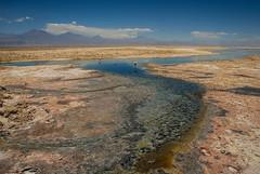 Laguna Chaxa y Flamencos (Matas Garrido Hollstein) Tags: flat flamingo salt salar flamenco chaxa