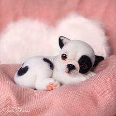 20160220-DSC_1381-2 (-trinny-) Tags: portrait dog pet cute art wool animal puppy french miniature blackwhite amazing doll pretty artist gallery felting handmade ooak hobby kawaii frenchie doggy needlefelting crafty creature buldog