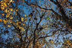 Fall (Sareni) Tags: park autumn trees light tree fall colors leaves leaf october serbia center list citypark vojvodina twop srbija 2014 banat drvo gnezda boje jesen svetlost centar granje lisce drvece alibunar juznibanat sareni