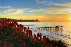 Blooming Aloe Vera Plants of La Jolla (markwhitt) Tags: ocean california light sunset vacation usa nature water colors beautiful beauty clouds landscape outdoors coast pier aloe nikon scenery colorful sandiego january scenic lajolla pacificocean coastline californiacoast blooming scrippspier aloevera markwhitt markwhittphotography