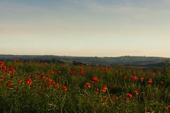 DSC04582 (wheelsy1) Tags: walking derbyshire poppy chesterfield sheepbridge poppyfield unstone richardwiles