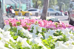 ((Change/Chance)) Tags: travel flowers colors nikon colorful taiwan traveling tainan     d5300