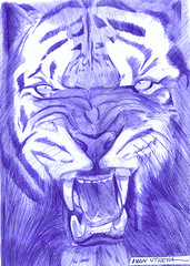 tigre a lapicero (ivanutrera) Tags: wild animal pen sketch drawing wildlife tiger draw dibujo tigre ilustracion lapicero boligrafo dibujoalapicero