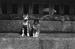 Kitty cats (Mitsudomoe) Tags: street bw film japan cat temple fukuoka rodinal canonp selfdeveloped minoltadimagescanelite5400 canon50mmf18ltm rolleisuperpan200 shootailor