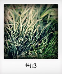 """#DailyPolaroid  of 19-1-16 #113 • <a style=""""font-size:0.8em;"""" href=""""http://www.flickr.com/photos/47939785@N05/25079785532/"""" target=""""_blank"""">View on Flickr</a>"""