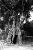 (Valerio Soncini) Tags: temple cambodia kambodscha khmer siemreap angkor tempel khmerart