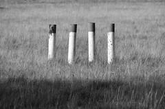 Vier (Lichtabfall) Tags: blackandwhite monochrome landscape four blackwhite 4 meadow wiese schwarzweiss landschaft vier pfähle einfarbig schneverdingen kennzeichnung campreinsehlen reinsehlen