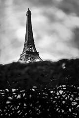 Remember Paris? (Joonas Marjo) Tags: travel blackandwhite bw paris france tower canon eiffel 1755mmf28 canon7dmkii 7dmkii canon7dmarkii