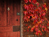 8 surrounded by autumn color (gahenty) Tags: autumnleaves e1 eight number8 1454mmf2835 oldwoodendoor autumnfallcolours