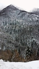 Valli del Pasubio   - Veneto - Italia (amos.locati) Tags: winter italy mountain snow alberi italia hiver neve neige amos inverno montagna munte copac zapada locati