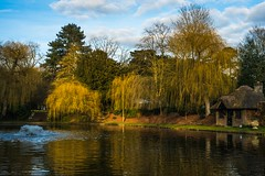 Lilly pond (docdave71) Tags: house black yellow garden landscape withe chestnuts oaks cedars ascott tranquillity