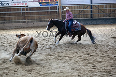 BJ1A5126 (yoann coin) Tags: en horse france western cutting bons equitation ccha chablais ncha charmot