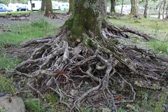 Roots (ben_nuttall) Tags: scotland lochlomand