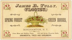 James B. Tully, Florist, Binghamton, New York (Alan Mays) Tags: old trees red plants ny newyork green fall yellow vintage ads paper advertising cards typography spring antique 19thcentury victorian illustrations ephemera businesscards baskets type bulbs names advertisements fonts printed shrubs greenhouses tully shrubbery binghamton floweringbulbs typefaces nineteenthcentury florists tradecards springforest ornamentaltrees beddingplants jamesbtully springforestgreenhouses