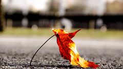 edited asphalt (R-Pe) Tags: show camera abstract canon photo nikon foto fotografie photographie sony picture pic exhibition peter gift bild geschenk ausstellung aufnahme melancholie 1764 rpe rbi 1764org www1764org