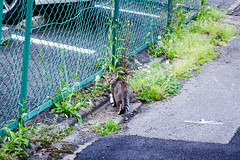Today's Cat@2016-04-26 (masatsu) Tags: cat pentax catspotting mx1 thebiggestgroupwithonlycats