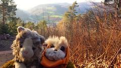 Trip to the Odenwald 2016 (rocknrolltheke) Tags: toys plushies softies valley smokey tal wicket odenwald smokeystravelcorner