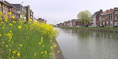 de gele toets (emmapatsie) Tags: water geel mechelen bloem coloma vaart nmbs leuvensevaart vierendeelbrug spoorwegbrug colomabrug vierendeel kanaalleuvendijle