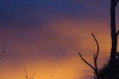 Twiggy sky (Occasionally Focused) Tags: morning light sunrise dawn pentax takumar k30 unmetered rawtherapee justpentax takumarbayonet takumarbayonet135mm125