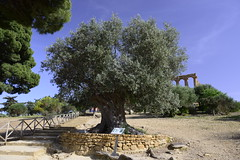 2016-04-17_16-36-07-Nikon D800 (Bernhard Kvaal) Tags: italy valley temples sicily sicilia agrigento