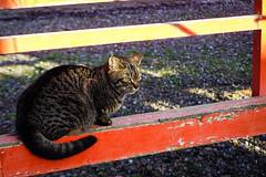 Today's Cat@2016-04-05 (masatsu) Tags: cat pentax cc100 catspotting mx1 thebiggestgroupwithonlycats