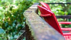 Rosso nella foresta (Pietro Focaroli) Tags: canada britishcolumbia tofino pacificrimnationalparkreserve