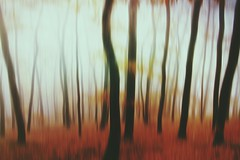 Trees Forest Shootermag Abstract Mystic Mysterious Blurred Motion at Gaugersee (sinepix) Tags: trees abstract forest mysterious mystic blurredmotion shootermag