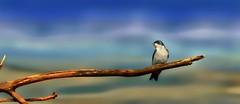 Take A Break (Caroline.32) Tags: bird catchycolors hiking vibrant branches barnswallow nikond3200 mchenrycounty mchenrydam 55300mmlens