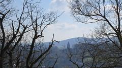 IMG_5533 (geraldm1) Tags: castle germany luther wartburg eisenach