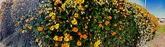 Bush of flowers #youngphotographer #meandmycamera #nature #flowers #pictureholic (miyaprince) Tags: flowers nature meandmycamera youngphotographer pictureholic