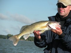 Big walleye