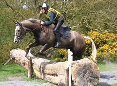 Ward Union hunter trials. (Leo Bissett) Tags: ireland horse dublin race speed fence jumping movement hunter trials equine fingal naul wardunionhuntertrials2016atmalahow