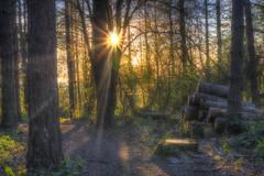 Forest sunburst (jamietaylor2127) Tags: light sun nature dusk ngc scenic logs sigma sunburst serene rays burst gf6