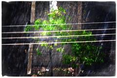 IMG_3175 smart copy (cnajhar) Tags: tree rain landscape lights