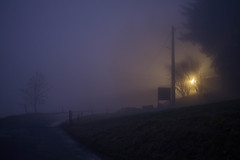 Light in the fog (-Baptiste Coub-) Tags: trees sky fog night forest outdoor hiver nuages paysage foggyday chablais 35mn foggyforest exterrieur d3100 baptistecoubronne