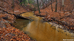 Forest Stream (mswan777) Tags: trees winter nature water leaves forest landscape woods nikon stream michigan dunes scenic rapids fallen 1855mm nikkor d5100