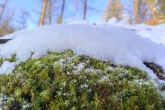 Später Wintereinbruch 2