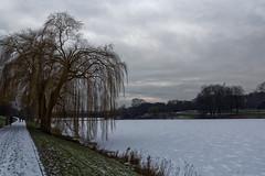 Ice Age - 001-0003_Web (berni.radke) Tags: schnee winter snow ice iceage eis mnster winterlandscape winterlandschaft aasee eiszeit