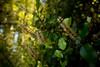 Flora DSC05400-16 (jasonclarkphotography) Tags: newzealand christchurch sony tasman nex nelsonlakesnationalpark canterburynz lakerotoroa nex5 jasonclarkphotography