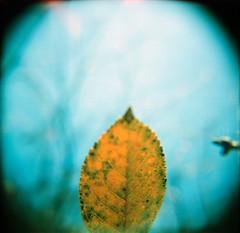 get closer (somekeepsakes) Tags: macro 120 6x6 film closeup analog mediumformat germany garden square deutschland holga lomo xpro crossprocessed europa europe analogue makro garten nahlinse quadratisch macrolens 2011 mittelformat lomographyxpro200