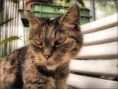 (Tölgyesi Kata) Tags: cat katze chat gatto katt gato neko macska üvegház greenhouse füvészkert botanikuskert botanicalgarden withcanonpowershota620 budapestfüvészkert budapest meow cica kitty zöld
