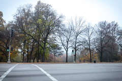 Foggy Fall in Forest Park (GlobalGoebel) Tags: park autumn trees fall weather st fog empty foggy crosswalk kingshighway laclede louissaint louisfujifilm x100tfujifujifilmx10st x100tfujifujifilmx100tforest