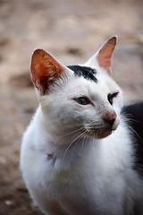 16/365 (myalfarasy) Tags: cats nature look animal nikon 365project d3300