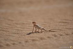 3-Oman-Desert-Marathon-Day-6_7246