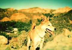 Porst SP William S Hart Ranch 1 () Tags: california ranch park camera west slr classic 35mm vintage germany japanese coast losangeles buffalo cowboy silent films cosina william retro hollywood western movies hart bison brand herd porst photoquelle