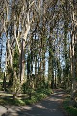 eucalyptus grove (Riex) Tags: california park trees nature forest minolta grove foliage trail arbres eucalyptus dynax sfba foret parc maxxum sanbruno amount a900 minoltaamount 28105mmf3545xi