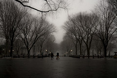 Central Park, NYC (nianci pan) Tags: nyc newyorkcity winter people urban blackandwhite bw snow plant newyork tree monochrome cityscape centralpark manhattan sony streetphotography urbannature pan lamdscape nianci sonyphotographing spnyalphadslr
