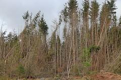 Leanachan Forest (RoystonVasey) Tags: bridge forest canon eos scotland highlands zoom great glen m 1855mm stm spean leanachan