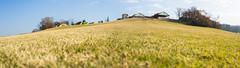 #大草原 (Explore) (David C W Wang) Tags: panorama green japan explore 日本 grassland 風景 植物 tokyogermanvillage 大草原 綠色 原野 草 全景圖 戶外 千葉縣 發掘 sel1635z 東京德國村 sonya7ii 眺望大草原