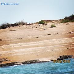 جزيرة مسجان. #جزيرة_مسجان #جزير  #بحر #رمال #سماء #اشجار #جمال_طبيعي (Esra Ben Jassem) Tags: اشجار سماء بحر رمال جزير جمالطبيعي جزيرةمسجان